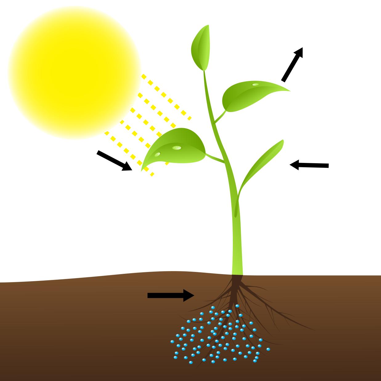 топик по английскому про фотосинтез хочу вам
