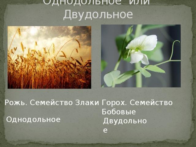 покрытосеменные размножаются спорами и семенами