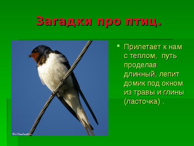 фамилия фамилия загадки с картинками про птиц вспоминали
